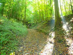 Autour des bois de côtes, Breuil le Sec 2008   Venez découvrir les forêts de l'Oise !   © Oise Tourisme Oise, Country Roads, Tourism