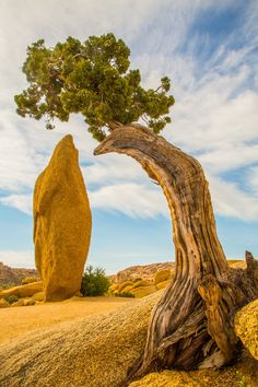 Near Jumbo Rocks (Joshua Tree, California) by dezzouk