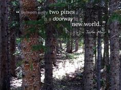 Between every two pines is a doorway to a new world. ~ John Muir