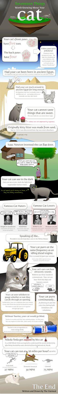 Fun Cat Facts