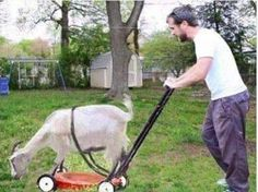 Redneck Mower Just could not resist no insult intended Redneck Humor, Tierischer Humor, Funny Animals, Cute Animals, Animal Memes, Cool Pictures, Funny Pictures, Funny Pics, K Om