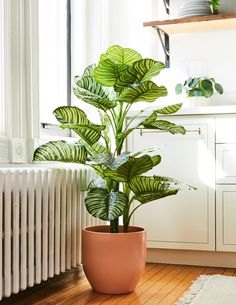 Add a pop of pattern to any space all year long with our large tall faux Calathea Orbifolia. Drop it in one of our ceramic floor planters for a polished look. Easy House Plants, House Plants Decor, Calathea Orbifolia, Houseplants Safe For Cats, Tall Indoor Plants, Decoration Plante, Jade Plants, Silk Plants, Floor Plants