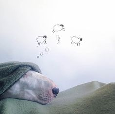 This Guy Poses His Bull Terrier in Hilariously Imaginative Scenes. When he's not doodling on just about everything in sight, Rafael Mantesso is drawing silly scenes around his bull terrier and posting them on Instagram.
