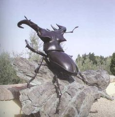 #Bronze #sculpture by #sculptor Anne Shingleton titled: 'Stag Beetle (Big Outsize Male Stag Beetle statues Bronze sculptures)'. #AnneShingleton