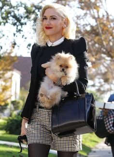 Porter son chien comme un bébé comme Gwen Stefani