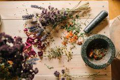 Kraut, Red, Medicinal Plants