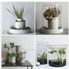 decoración de plantas de interiores | decoración con plantas y ceramica blanca