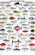 Deep Sea Fish List Pacific - Bing images Fish List, Deep Sea Fishing, Tropical Fish, Pacific Ocean, Bing Images, Abstract, Maps, Artwork, Summary