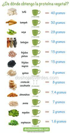 proteína infográfico