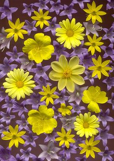 Let's brighten it up a little.  Tonight and Friday, we will do YELLOW and LAVENDER or PURPLE.  Please no orange or gold ... we will do those combinations on a different day.  Thank you.