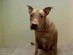 (102) MTA - A0600261 - Brooklyn - Publicly Adoptable... - Urgent Part 2 - Urgent Death Row Dogs