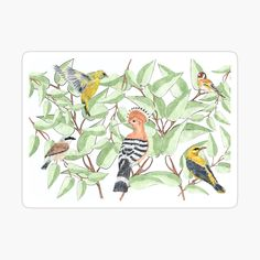 Buy Birds, Decorate Notebook, Vibrant Colors, My Arts, Kids Rugs, Watercolor, Stickers, Prints, Stuff To Buy