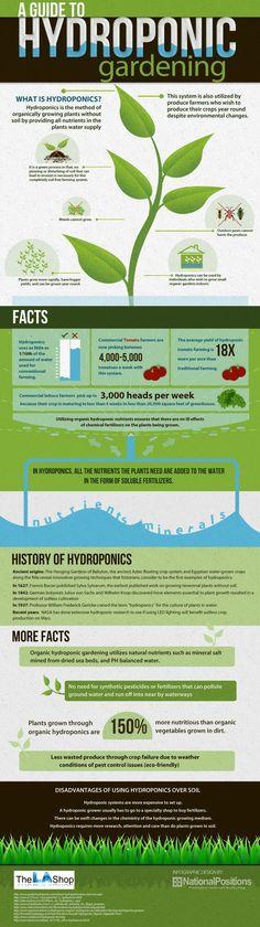 hydrphonic gardening - http://www.infographicsfan.com/hydrphonic-gardening-2/