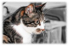 Cat!   by P Sterling Images
