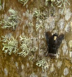 Insect Photography, Insects, Africa