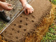 This is straw bale gardening.  I find this wonder I want to try it.