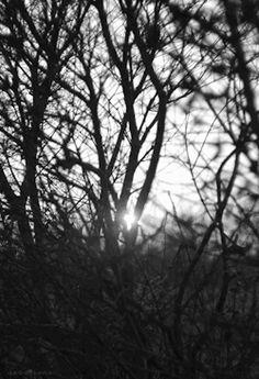 gif love pretty cute light tree Black and White sad beautiful pain sun in love cute gif black and white gif love gif loved sad gif Beautiful gif pretty gif tree gif light gif pain gif Sun Gif in love gif loved gif