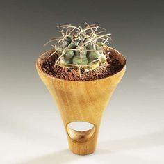 Cactus Rings: Prickly Jewelry by Barbara Uderzo