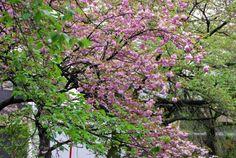 Balade au bord d'un canal de Kyoto   I LOVE travelling