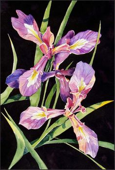 Wild Iris small print lavender purple gold and by BlueOtterArt