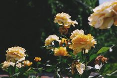 flowers, yellow, and nature imageの画像