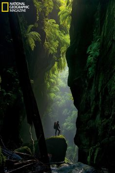 """Claustral Canyon, Australia. """"Cascades of mammoth ferns flourish in the humid air trapped between the narrow walls of Claustral Canyon. First explored in 1963, the formation was named for its claustrophobia-inducing passages and ranks among the region's most visited canyons.""""  Photograph by Carsten Peter"""
