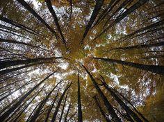 Perspectiva de un bosque en otoño #ochagavia #navarra #españa #irati #selvadeirati #hayedo #otoño #perspectiva #colores #estaciones #paisaje #gopro