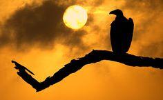 Fotógrafo faz imagens das silhuetas de animais selvagens usando apenas luz natural