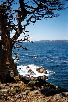 Carmel, California.....this is where Bob and I are going for our honeymoon in a month!  Can't wait to go!  Love Carmel!!