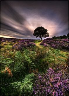 The North York Moors is a national park in North Yorkshire, England. The moors is one of the largest expanses of heather moorland in the United Kingdom. Beautiful World, Beautiful Places, Beautiful Pictures, Landscape Photography, Nature Photography, Night Photography, Landscape Photos, All Nature, North Yorkshire