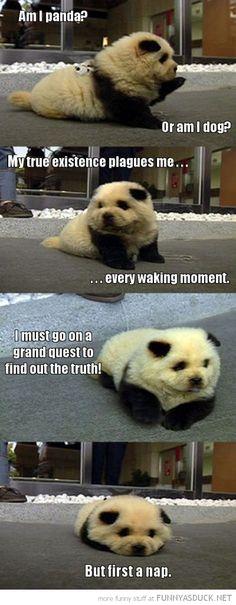 Am I a panda? Or am I a dog? First, a nap.