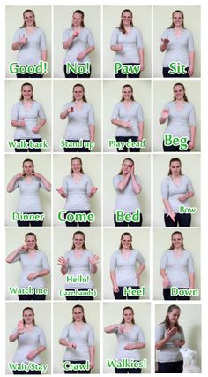 Hand Signals For #Deaf #Dogs ... This may be very helpful.