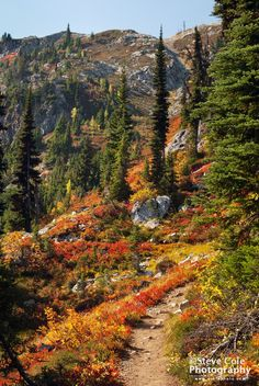 Fall Splendor by Steve Cole | Heather Pass, Washington State