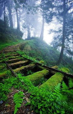 """ Overgrown railway tracks in forest ~ Jiancing Historic Trail, Taipingshan National Forest ~ Taiwan. "" "" Overgrown railway tracks in forest ~ Jiancing Historic Trail, Taipingshan National Forest ~ Taiwan. Beautiful World, Beautiful Places, Beautiful Pictures, Amazing Photos, Beautiful Forest, Beautiful Dream, Stunning View, Beautiful Scenery, Train Tracks"