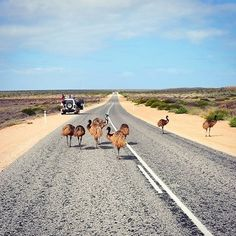 This is what a traffic jam looks like at Australia's coral coast, Cape Coconut Perth, Brisbane, Melbourne, Queensland Australia, Western Australia, Australia Travel, Australian Birds, Rock Pools, The Beautiful Country