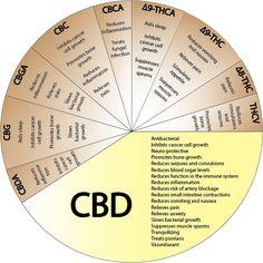 Cannabis Médical Belgique   CBD : Qu'est-ce que c'est ?