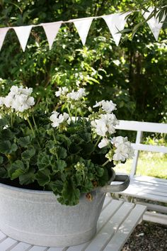 white geraniums in a galvanized oval shaped  bucket
