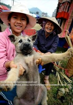 Vietnam: Dog Meat Puppies For Sale