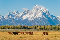 Grand Teton National Park | 17 Of The Most Underrated National Parks In America