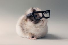 """This adorable photoseries by """"Lieveheersbeestje"""" turns guinea pigs into upscale models. [via neatorama] Previously: Stuff My Guinea Pig Does Pics) Animals And Pets, Baby Animals, Funny Animals, Cute Animals, Top Photos, Cute Photos, Le Zoo, Cute Guinea Pigs, Sphynx"""