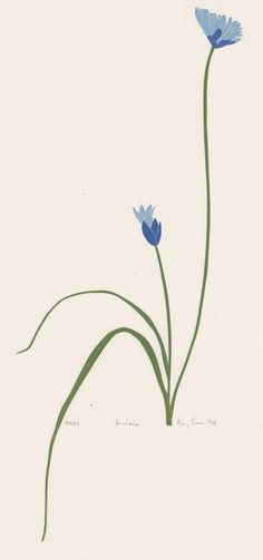 Dichelostemma (Themidaceae). Henry Evans, block print.
