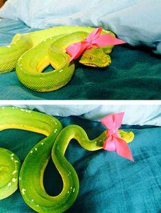 Você Tem Medo De Cobra? Coloque Um Chapéu Nela!