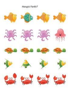 deniz_hayvanları_aktiviteler