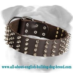 #Leather #English #Bulldog #Collar with Solid Hardware $59.90 | www.all-about-english-bulldog-dog-breed.com
