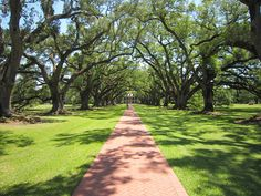 Landscaping can make all the difference. This image of Oak Alley Plantation in Vacherie, Louisiana looks to the front of the house from a road along the Mississippi River.    The house is not remarkable: it's a beautiful, well-preserved example of a plantation house though it's similar to many other homes built in the southeastern United States... it's the trees that set this property apart. — at Oak Alley Plantation just north of New Orleans, Louisiana.