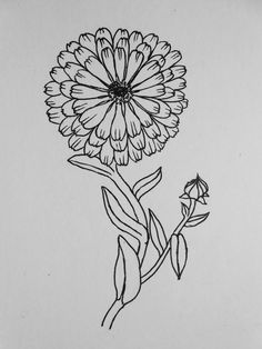 Hand Drawn Flowers - Calendula Officinalis Or Pot Marigold | Floral Pattern | Pinterest ...