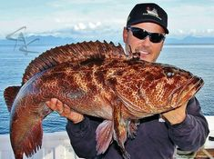 Grouper #fishing #wickedcatch