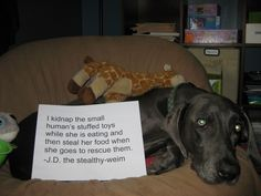 I love the dog shaming site and check it all the time. I steal the small human's stuffed toys while she is eating and then steal her food when she goes to rescue them. the stealthy-weim Brilliance is never sorry! I Love Dogs, Puppy Love, Cute Dogs, Dog Shaming Photos, Funny Animals With Captions, Animal Captions, Teach Dog Tricks, Weimaraner Puppies, Cat Shaming