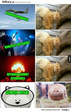 Funny Cute Cats, Wtf Funny, Hilarious, Best Memes, Dankest Memes, Jokes, Animal Memes, Funny Animals, Polish Memes