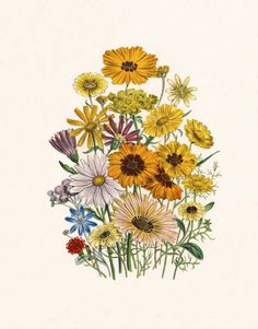 Daisy, Art Print Botanical Poster, Cottage Lake House Decor, Yellow Flower Print, Jane Loudon Flower Illustration, Victorian Daisies No. 1